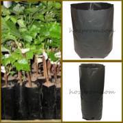 Packages for seedlings Growing plants Growing conifers
